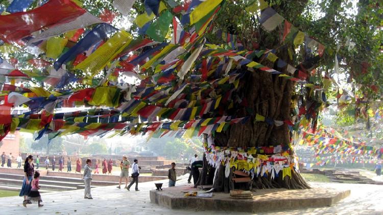 15. Cây Bồ đề (trên nền của cây Vô ưu xưa)